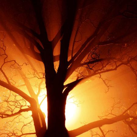 transfiguration mystical light